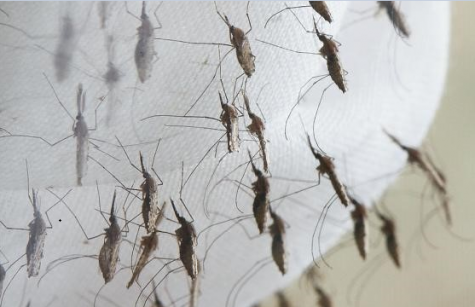 Navarro's Class Project Attacks Mosquito Problem on Campus