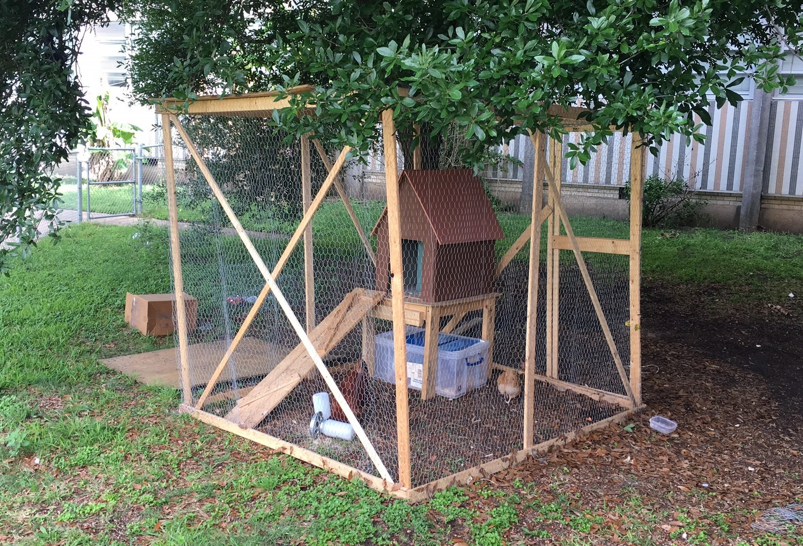 Our Linked Learning Chicken Coop sits in the Courtyard